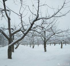 久违的雪  出门的梦想又破灭了 http://t.cn/R2dbYl1 
