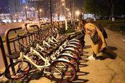 共享单车:资本和不知疲倦的人