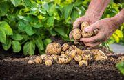 一文读懂农业B2B电商发展现状